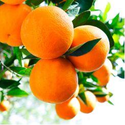 Арома-скраб для тела Клерадерм Апельсин 170 мл